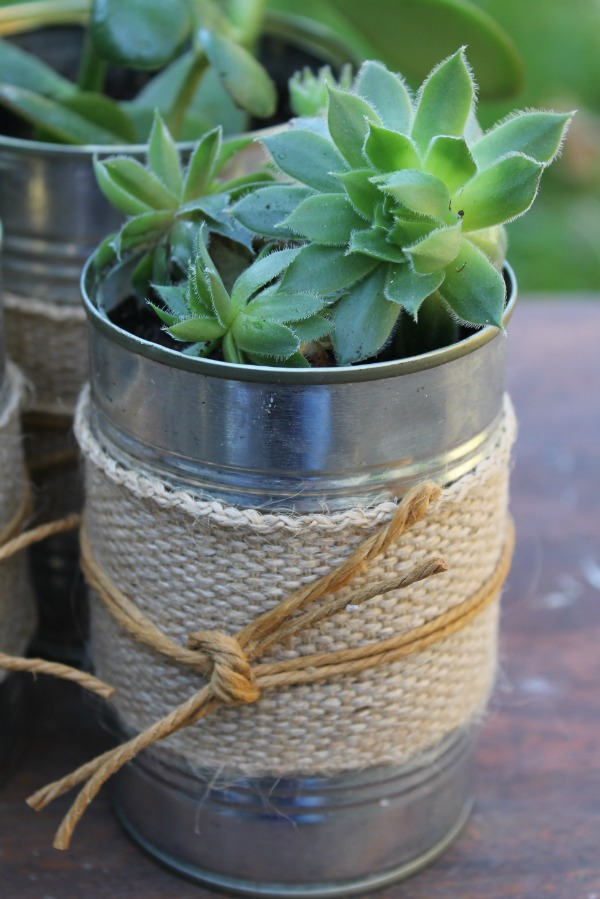 Succulent In Can with Jute and String | Home Heart Haven