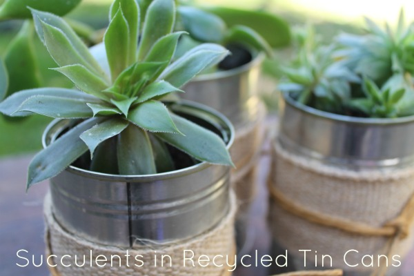Succulents in Recycled Tin Cans | Home Heart Haven